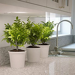 Caesarstone - Natural Quartz Surface